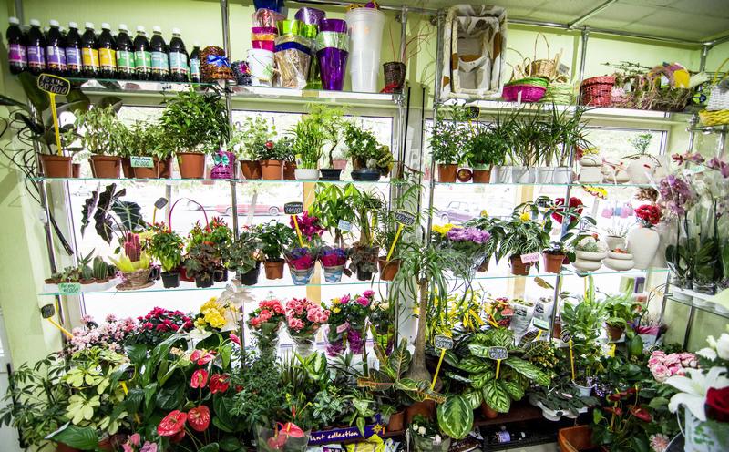 Доставка цветов в бобруйске лудизия доставка цветов в день заказа ангарск